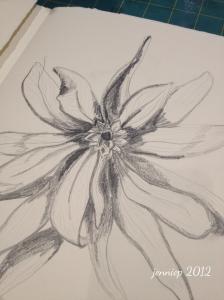 Pencil sketch, Protea